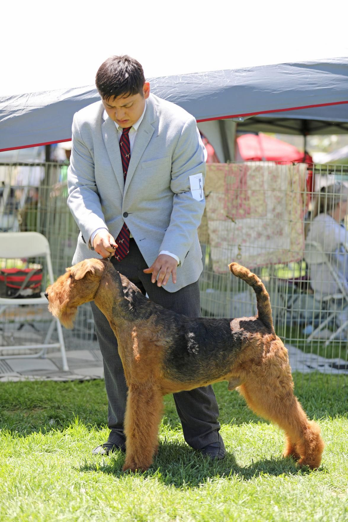 Photos All Breeds Get Their Shot At Glory At Lompoc Kennel Club