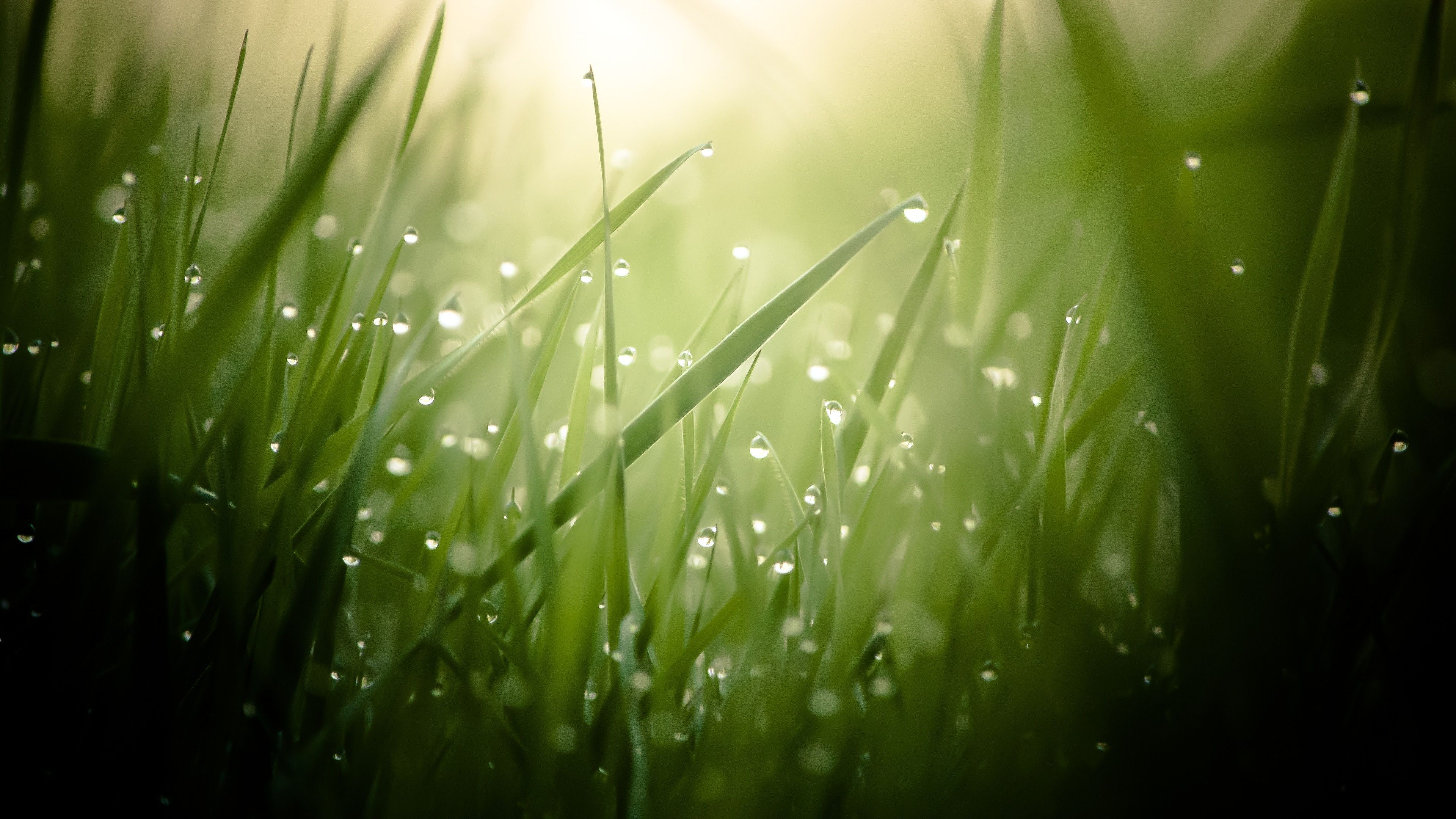Grass 4k Hd Wallpaper Green Drops Dew Sun Rays 26146 Nature Wallpaper Scenery Wallpaper Green Nature Wallpaper