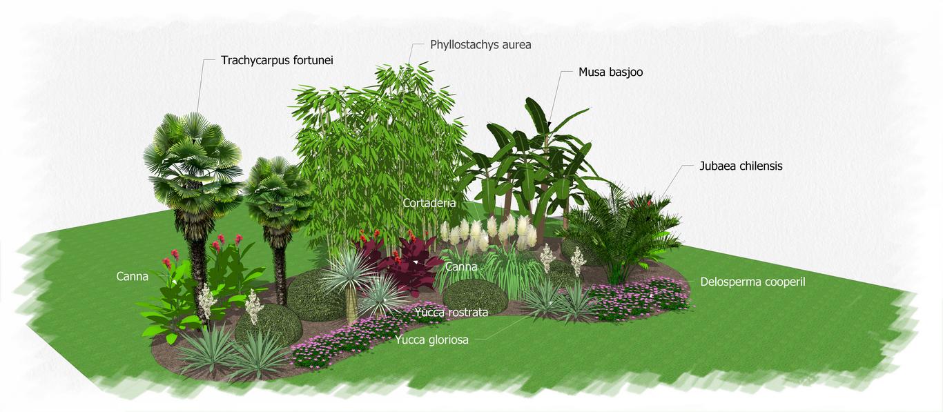 Amenagement Jardin Avec Palmier Beautiful Amenagement
