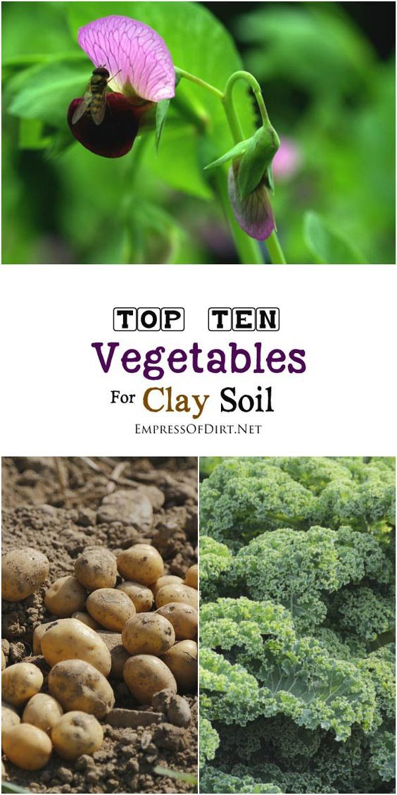 10 Best Vegetables For Clay Soils Organic Gardening Soil Clay