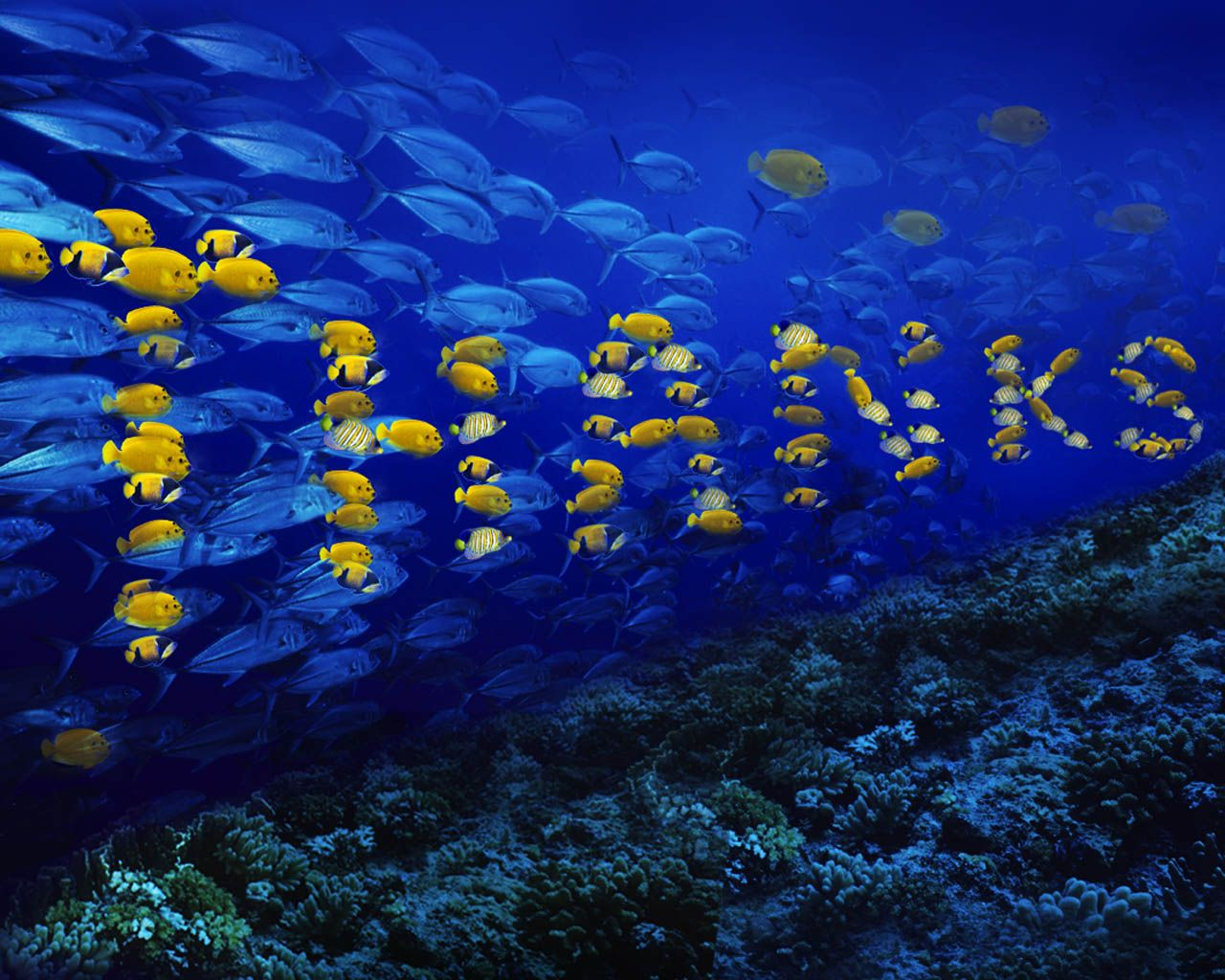 Wild Animals Fish Wallpaper Free Wallpaper For Computer
