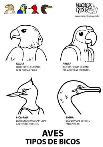 Aves Tipos de Bico