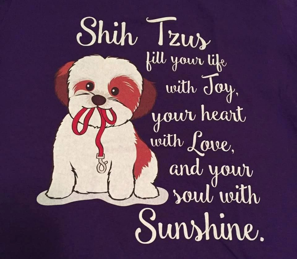 Shih Tzu Affectionate And Playful Shih Tzu Puppy