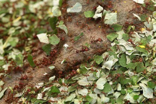 Pflanzen Mit Zimt Pflegen Ist Das Moglich Schadlinge Im Garten Gemuse Anbauen