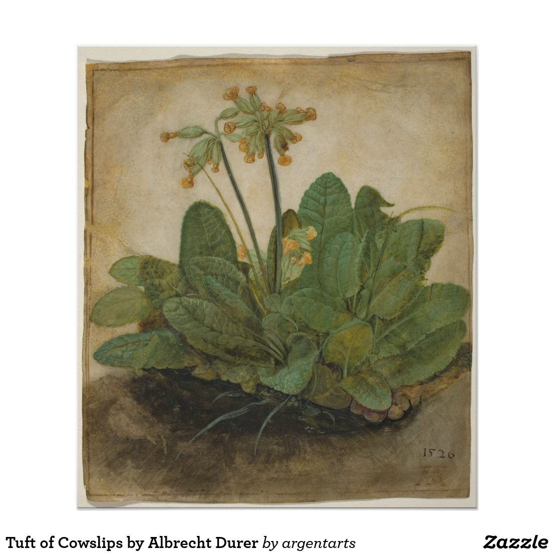 Tuft Of Cowslips By Albrecht Durer Poster
