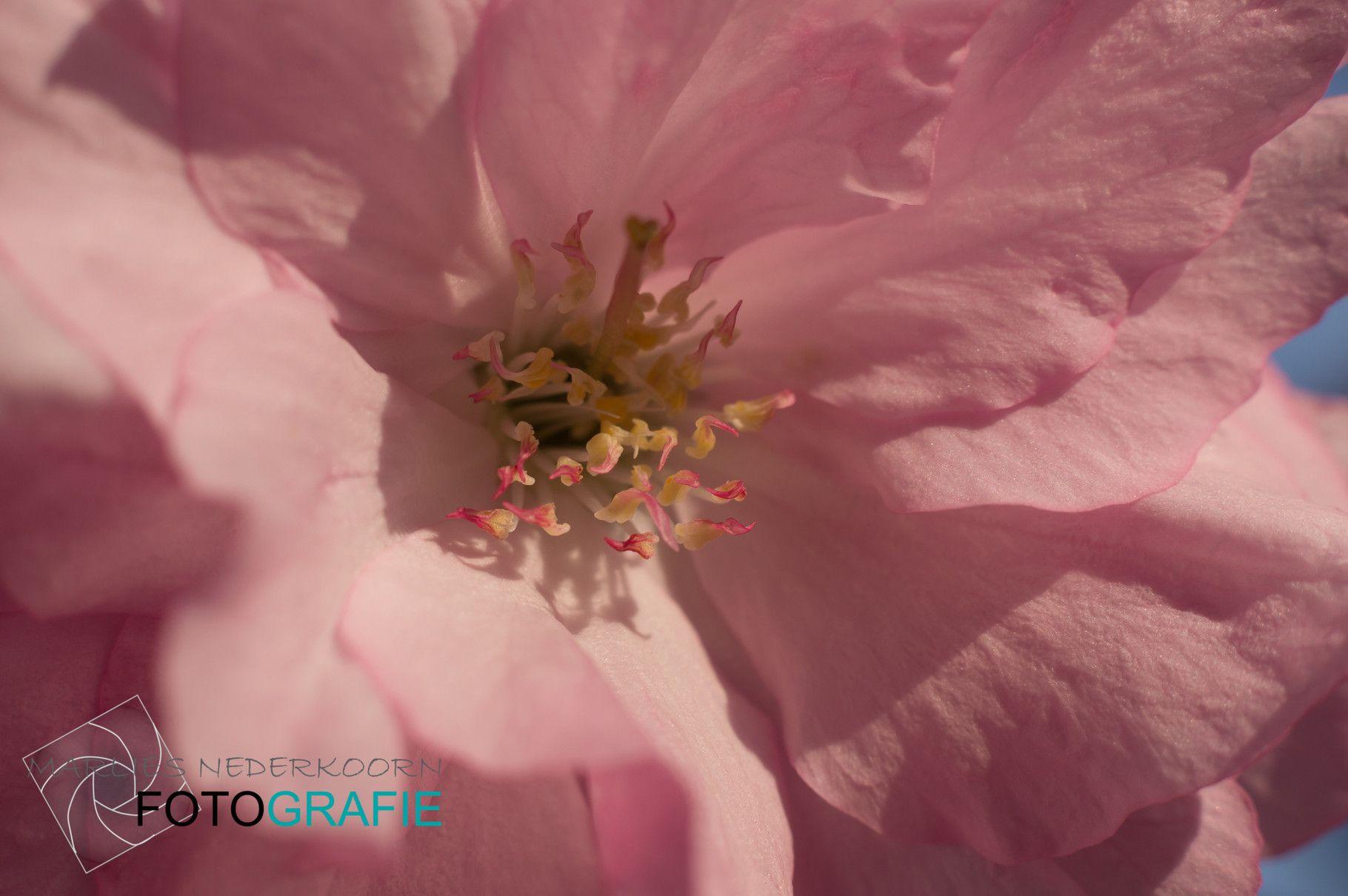 Bloemen en dieren - De website van Marlies Nederkoorn!