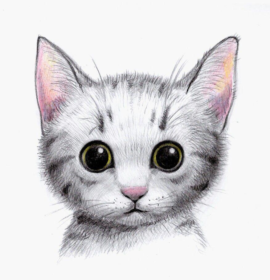 Sweet Kitty Cat art illustration, Cute drawings, Cat
