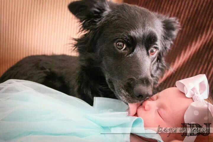 Our  puppy Macy and our newborn Reagan. Macy is so protective of Reagan, I'm pretty sure she thinks Reagan is her own pup.