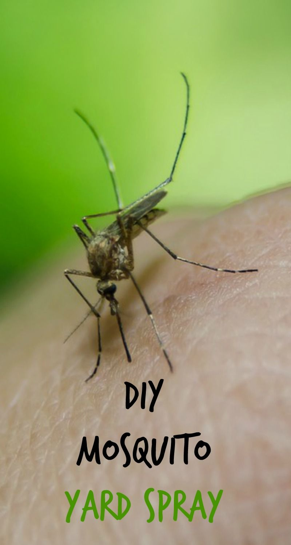 Diy Mosquito Yard Spray Recipe Mosquito Yard Spray Diy