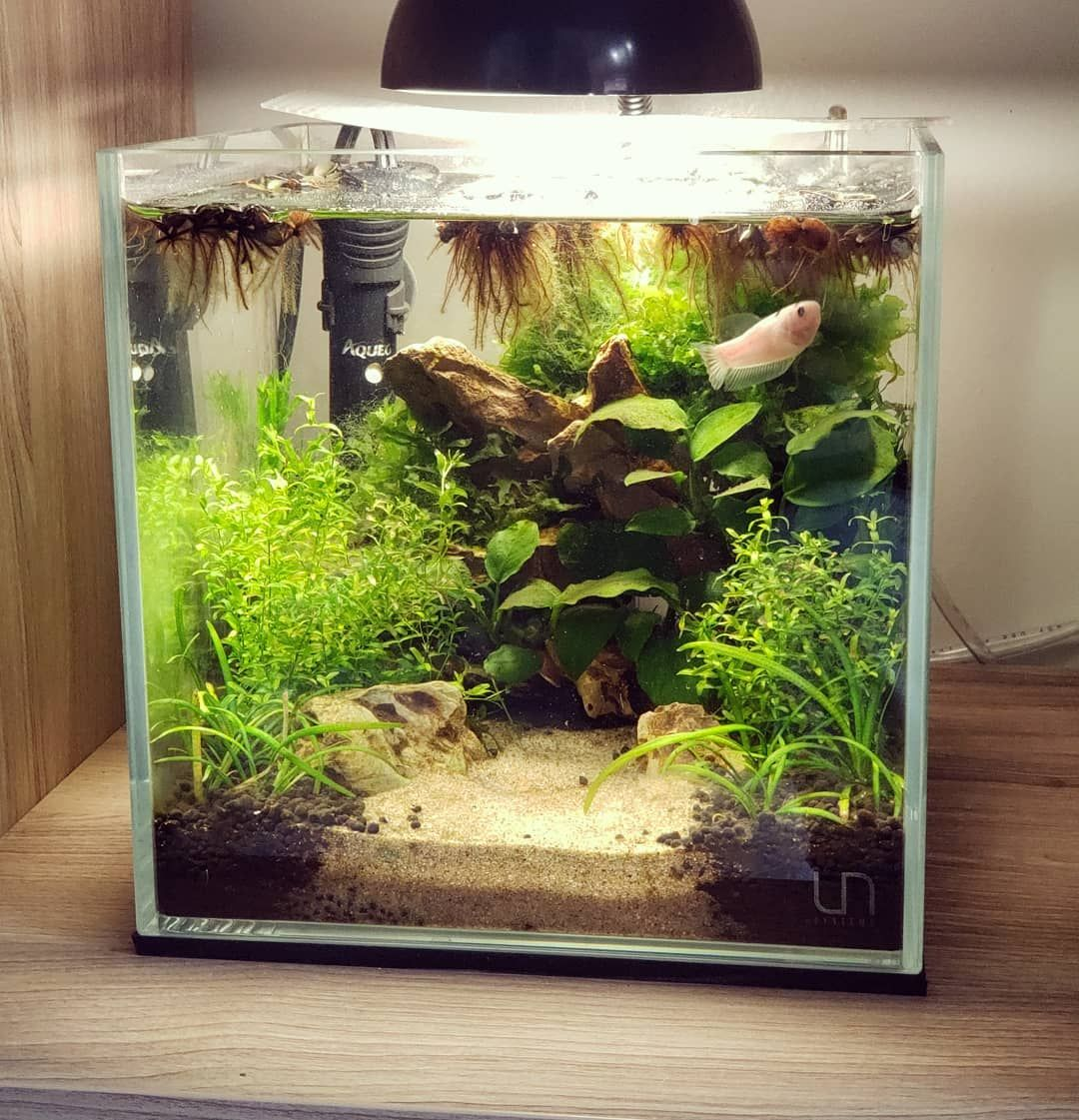45 Nano Planted Tank Design Inspirations To Displayed At The Office Rooms And Living Room That Will Eliminate Your High Stress45 Nano Planted Tank Design Insp Betta Fish Nature Aquarium Fish