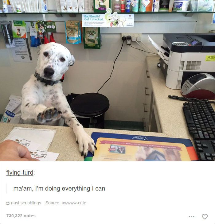 Funny Animals Funny Memes About Work Funny Dog Memes Funny Animal Pictures