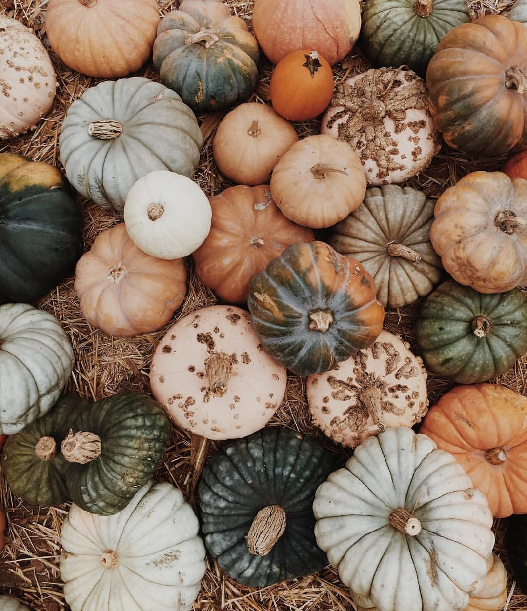 The Patch (at Clancy's Pumpkin Patch)