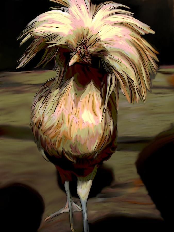 Polish Digital Art - Polish Chicken 3 by Karen Sheltrown