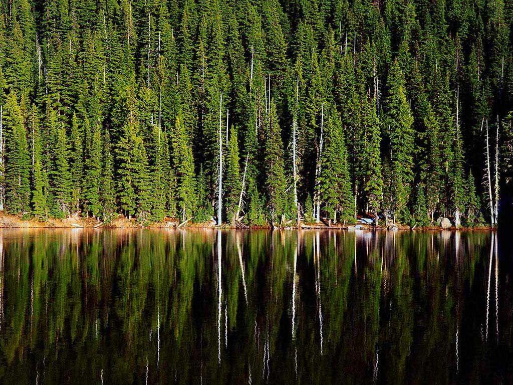 Su ve toprağın ağaçla buluşması