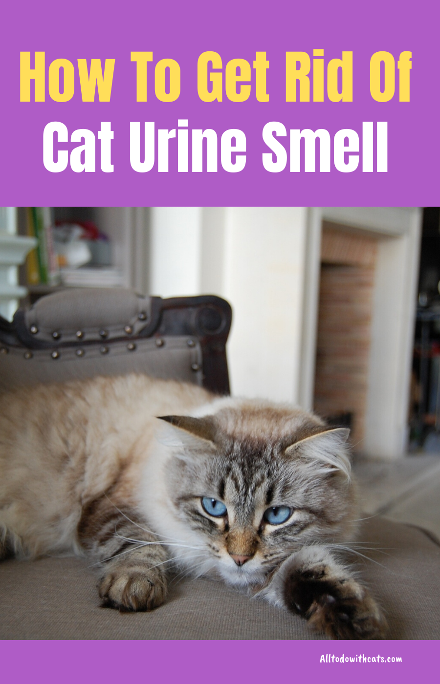 How To Get Rid Of Cat Urine Smell For A Fresher Home With Images Cat Urine Smells Cat Urine Urine Smells