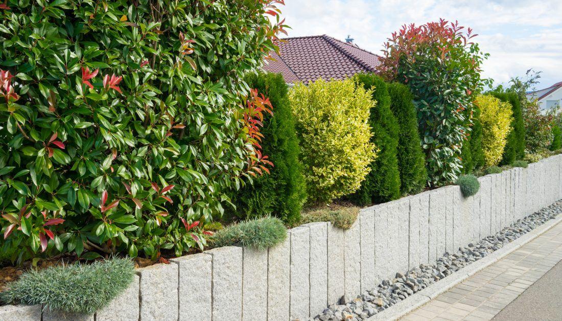 Abwechslungsreiche Hecke Mit Strauchern Und Baumen Als Sichtschutz Im Vorgarten Garten Hecken Vorgarten Garten Bepflanzen