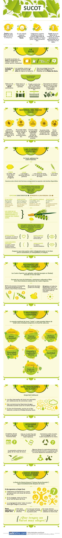 Infografía De Sucot Sucot Festividades Judias Costumbres Judias