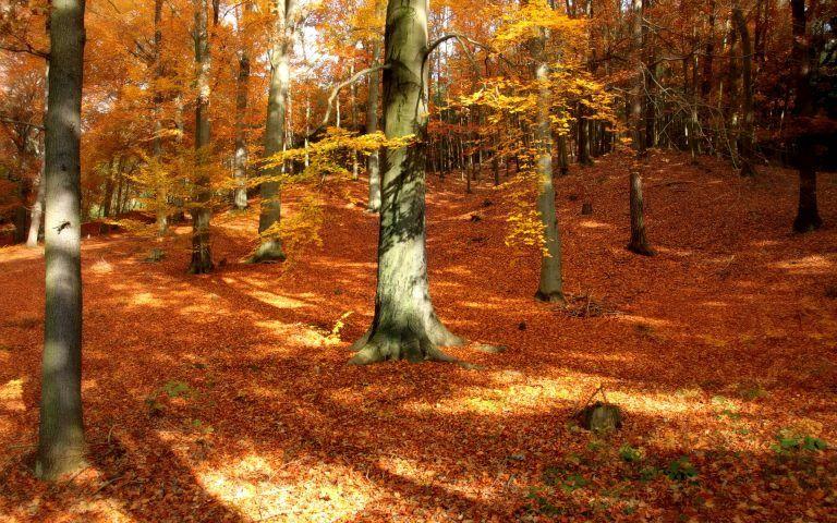 autumn forest desktop background fall wallpapers hd autumn rh pinterest com
