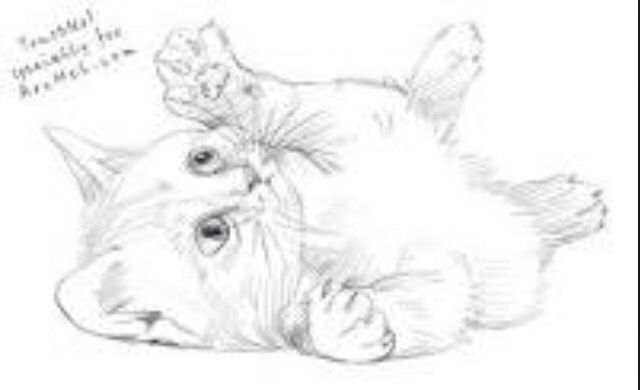 Playful Kitten Sketch Kitten Drawing Animal Drawings Cartoon Cat Drawing