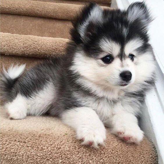 Baby beast!