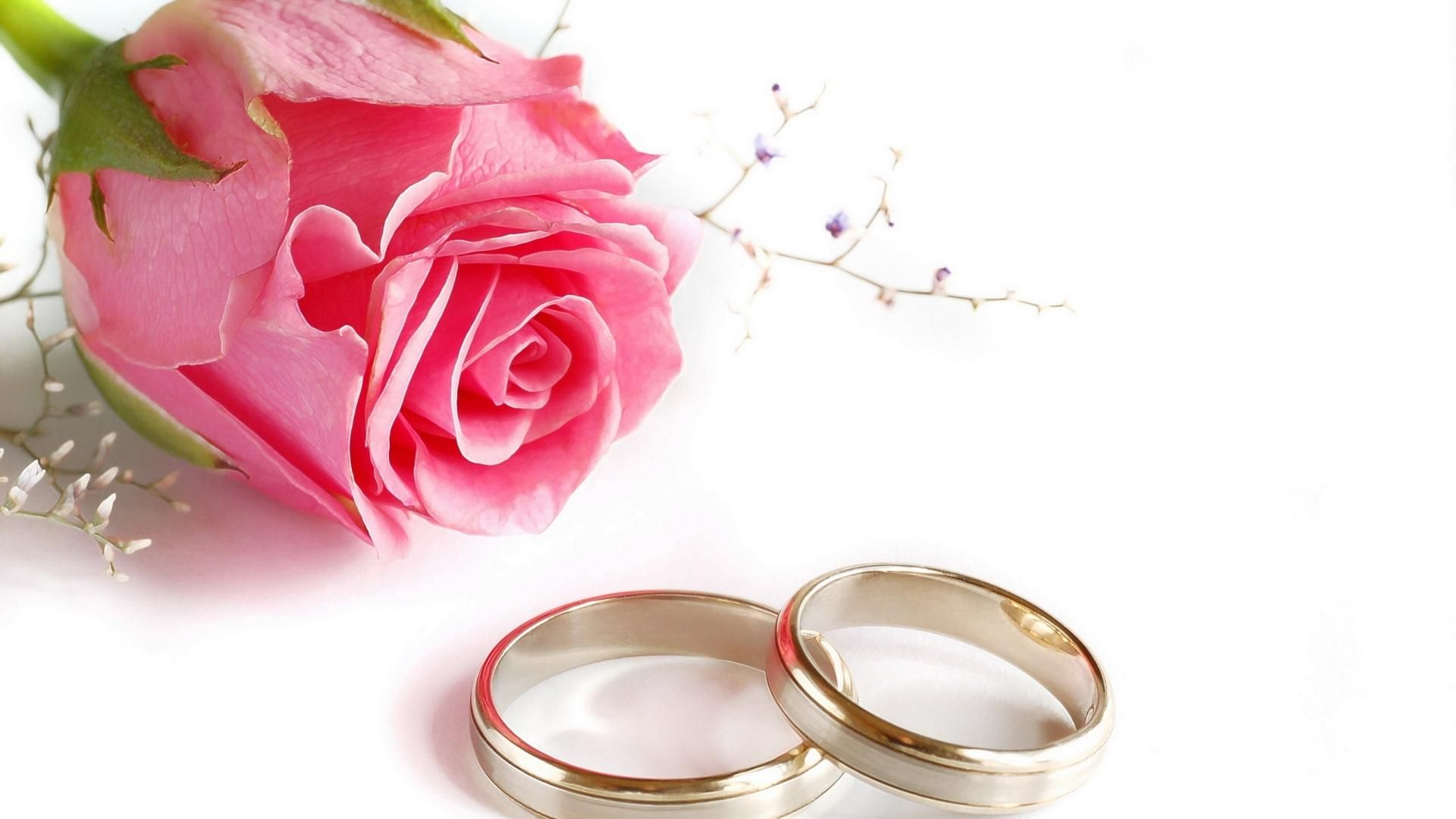 Wedding Rings Rose Flower HD Wallpaper | Wedding background ...