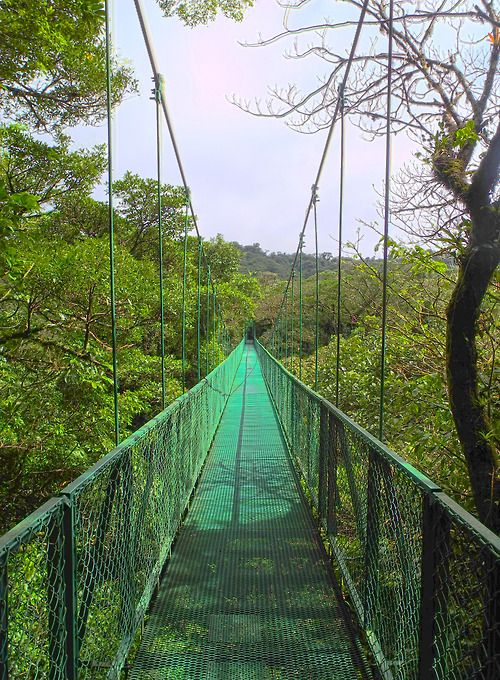 gotraveling:  Cloud Forest, Monteverde, Costa Rica - HDR