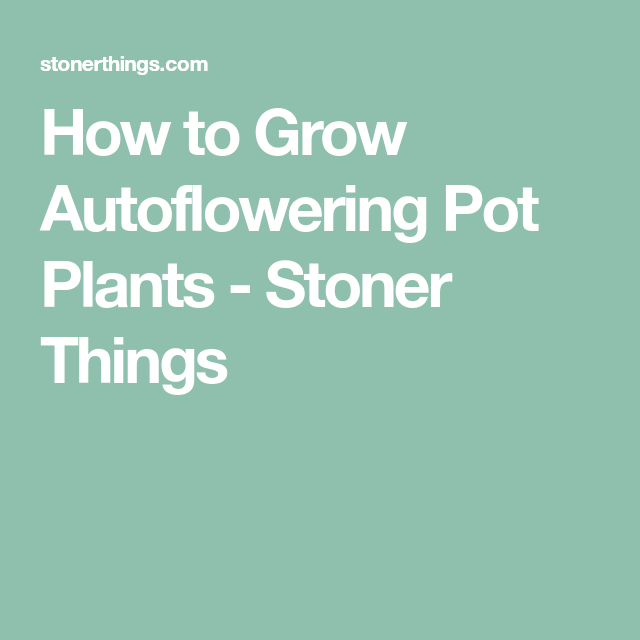 How to Grow Autoflowering Pot Plants - Stoner Things