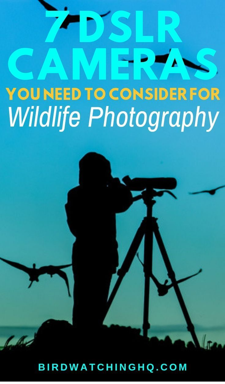 The 7 Best Cameras For Wildlife Photography (2020
