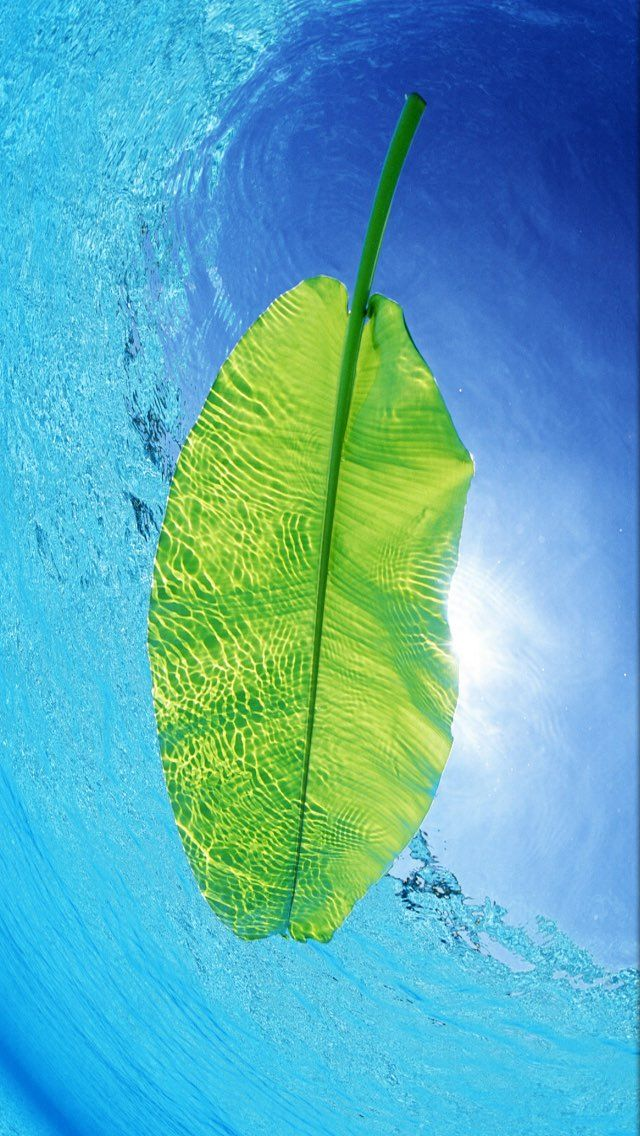 iPhone and Android Wallpapers Floating Palm Leaf