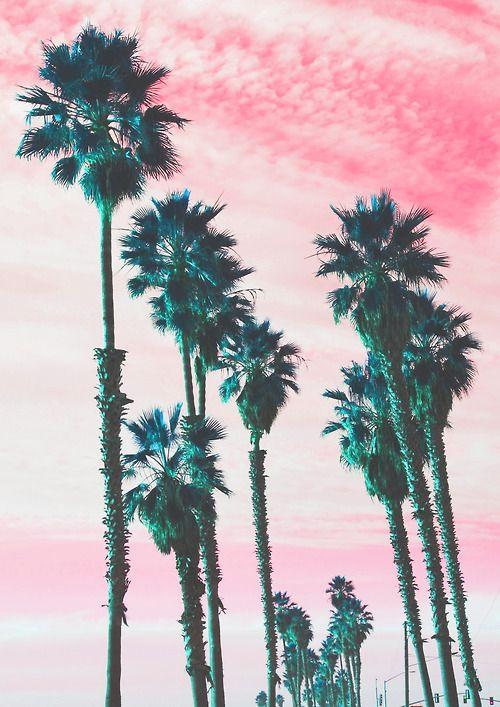 palm trees tumblr. Palm Trees Tumblr Design Decorating 1511152 Pool K