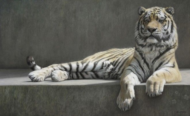 Gary Stinton  Recumbent Tiger RECUMBENT TIGER Pastel on museum board 24.25 x 39.5ins (61.6 x 100.3cm)