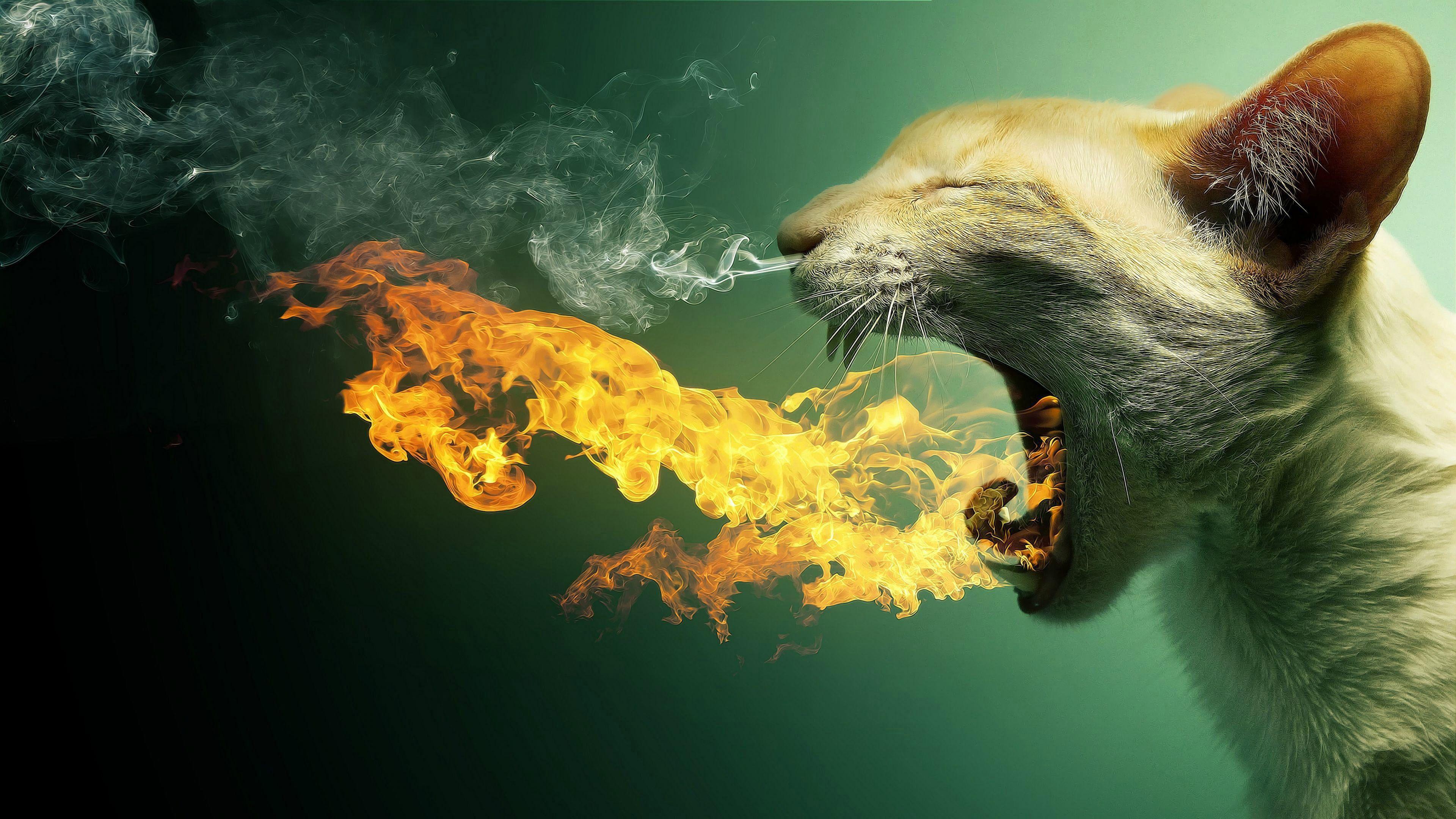 Animal Silhouette Art Design Symbol Cat Fire Light Digital Art Funny Smoke Flame 4k Wallpaper Hdw Cat Wallpaper Hd Wallpapers For Pc Wallpaper Pc