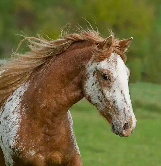 Cute Appaloosa Pferde Pferde Und Pferde Bilder