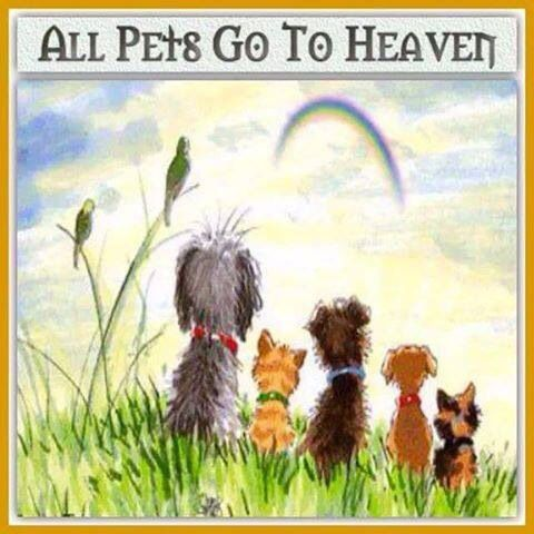 All Pets Go To Heaven Pet Loss Quotes Rainbow Bridge Dog Sympathy