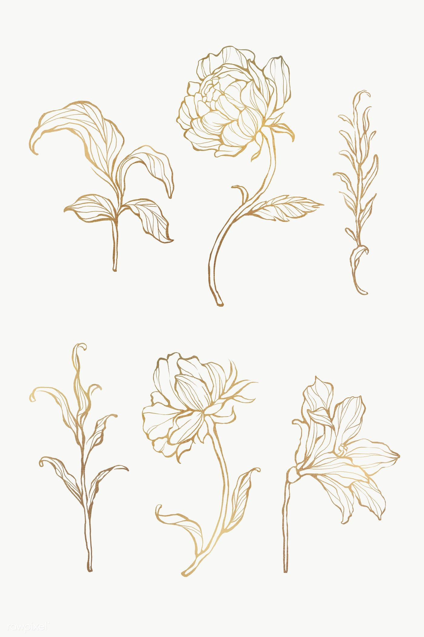 Download Premium Png Of Gold Floral Outline Set Transparent Png 2019752 Flower Drawing Gold Drawing Floral Drawing