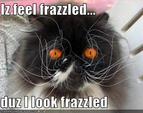 Image result for frazzled cat images
