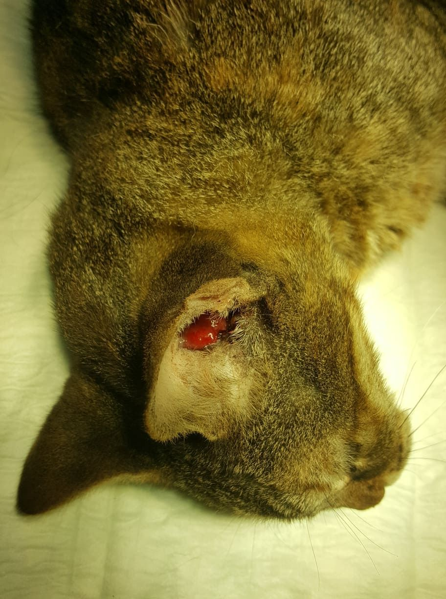 """From Pazit Sweed Yamin """"Mast cell tumor on a 14 years old"""