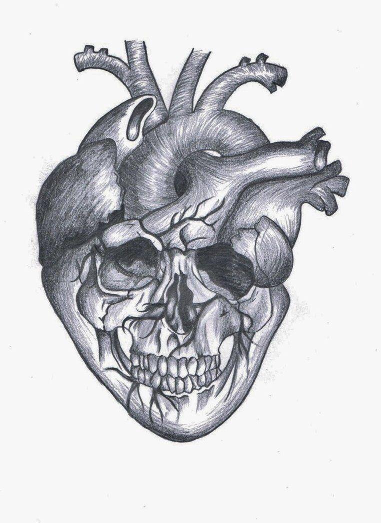 Pin by Gamze Kartal on Interesting Drawing | Pinterest | Anatomical ...