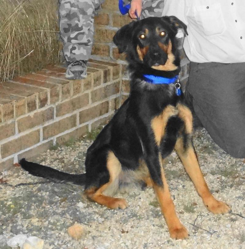I Found GUINNESS DORA On German Shepherd Dogs Shepherd Dog - Dora german shepherd