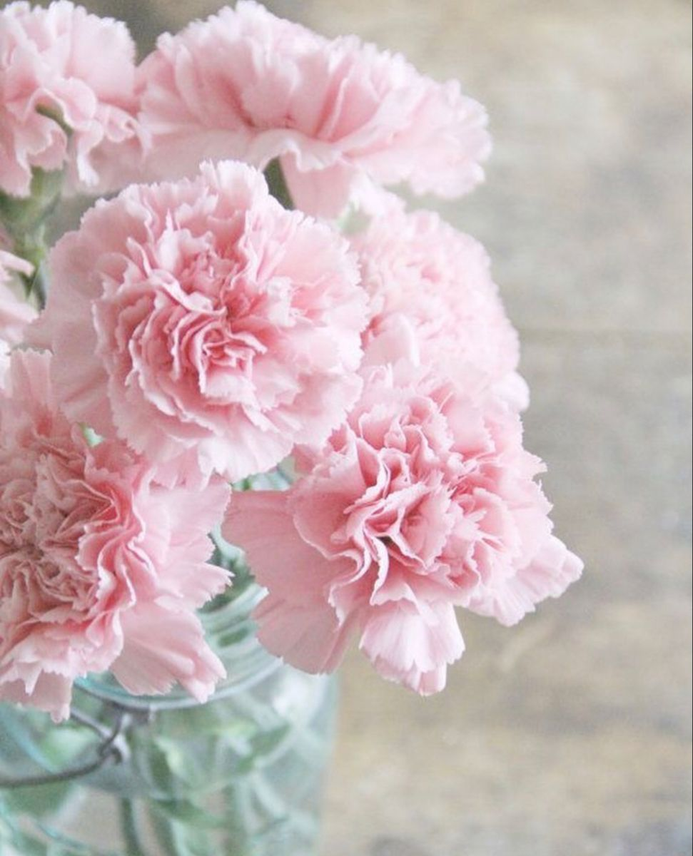 Carnations In 2020 Flowers For Sale Online Wedding Flowers Carnation Flower