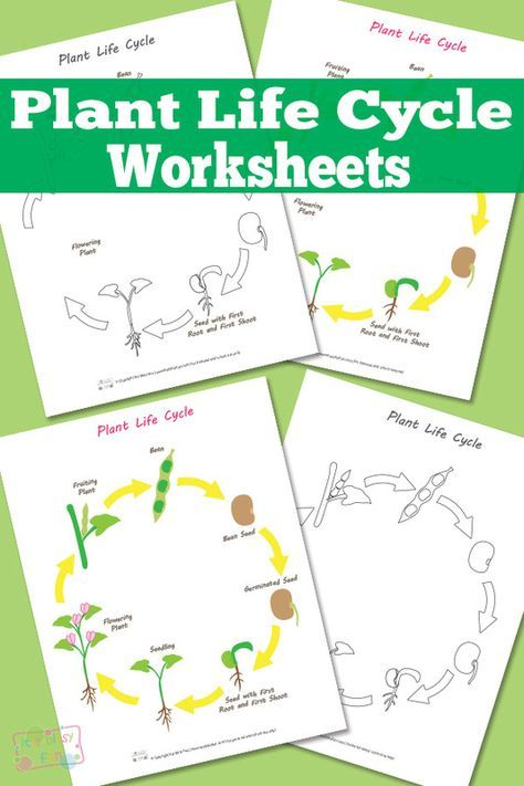 Plant Life Cycle Worksheet Classroom Plant Life Cycle