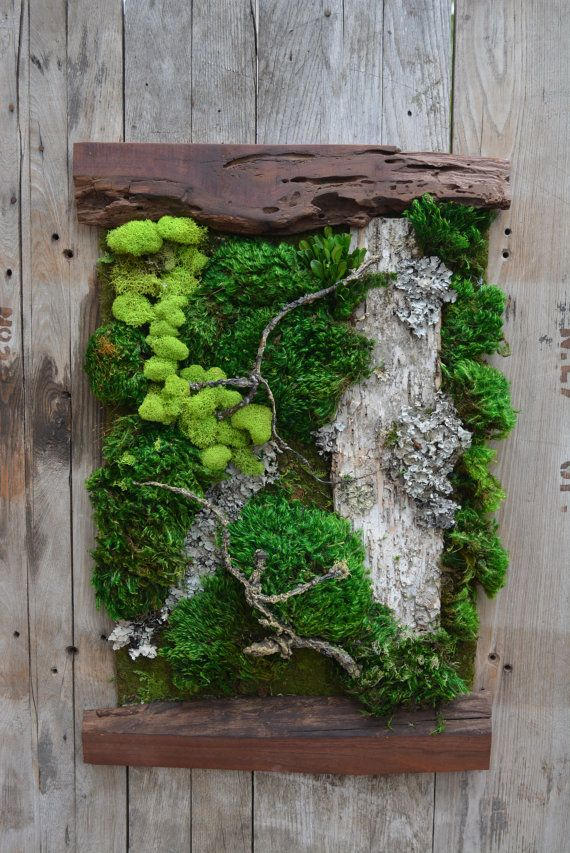 Beautiful Preserved Living Moss Framed By Two Pieces Of Live Edge