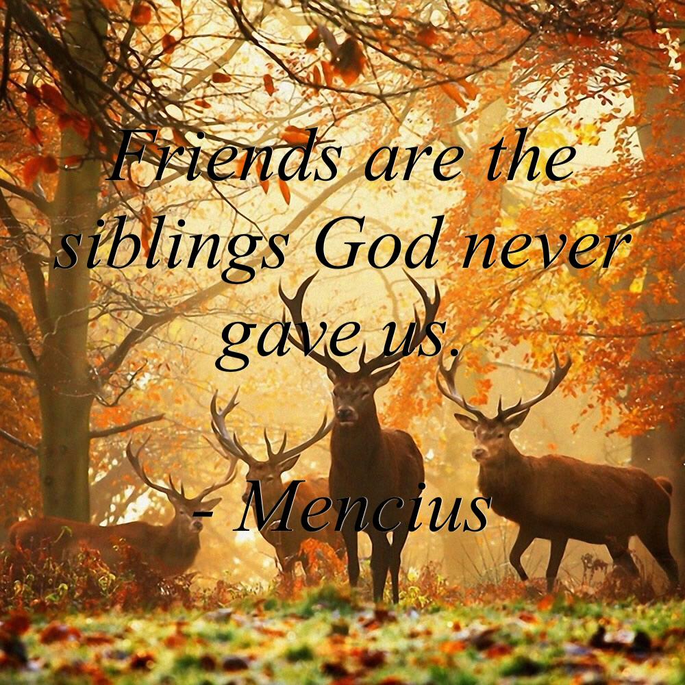 Friendship wisdom.