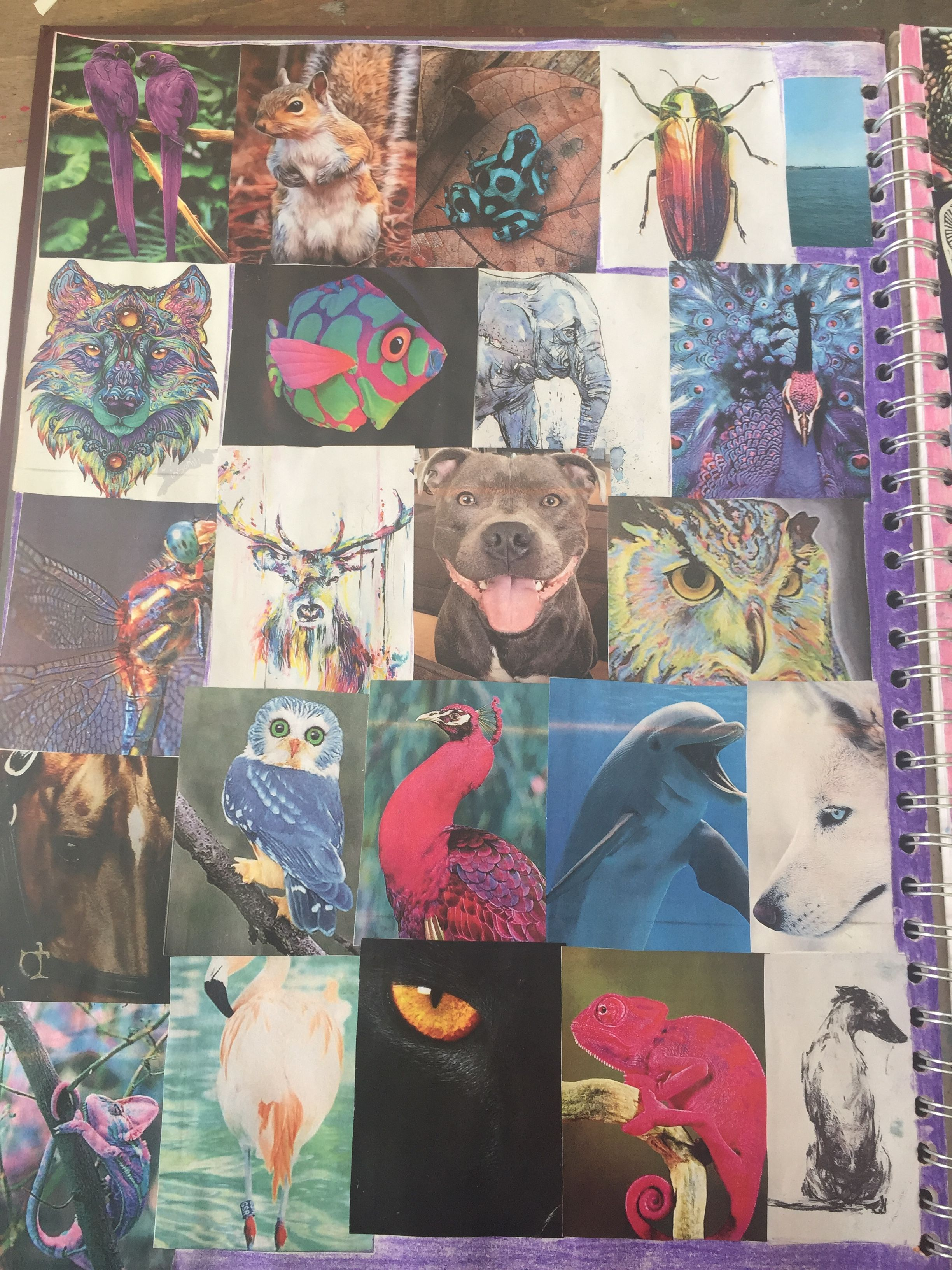 This one are mi colleague of my thinks in this project are Animals and I put a lot of pictures of different animals in there .
