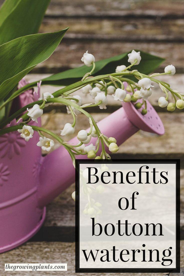 Benefits of bottom watering in 2020 plants growing