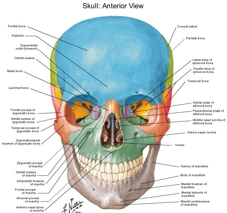 Pin by Jenny Echols on Anatomy and physiology | Pinterest