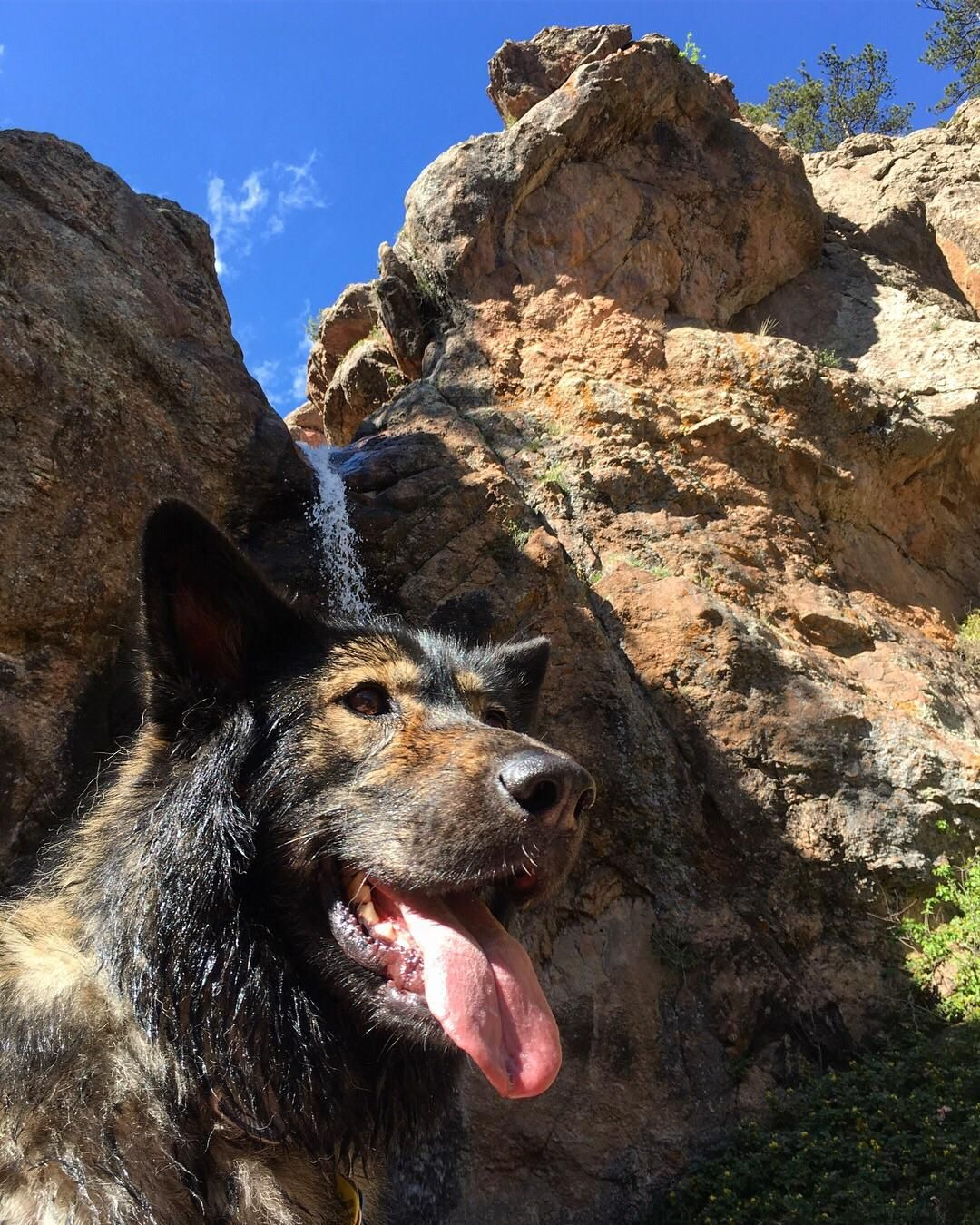 Simba On The Horsetooth Waterfall Trail In Fort Collins Co