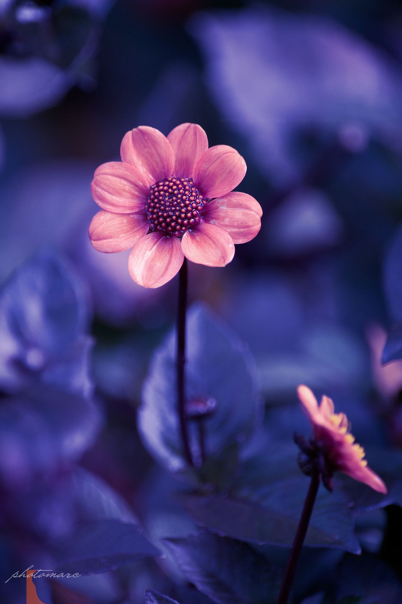 P H O T O M A R C Beautiful Flowers Wallpapers Flowers Nature Wonderful Flowers