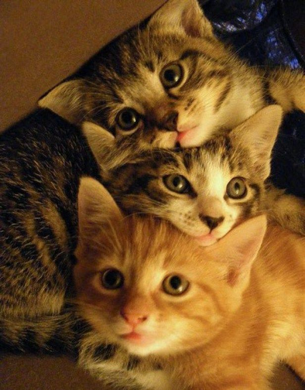 Cat S In The Bag 2nd March 2016 Beautiful Cats Kittens Cutest Cute Cats