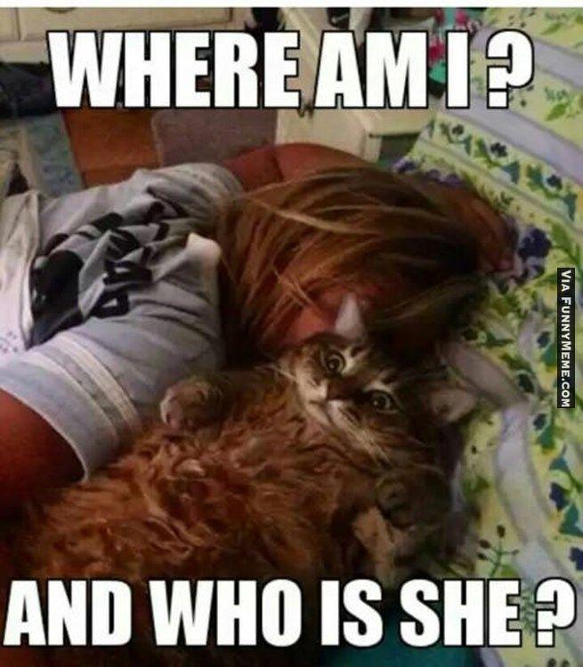 Cat Memes Too Much Catnip Last Night Funny Cat Pictures Funny Animal Pictures Funny Animals